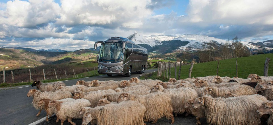 i8 Coach with sheep