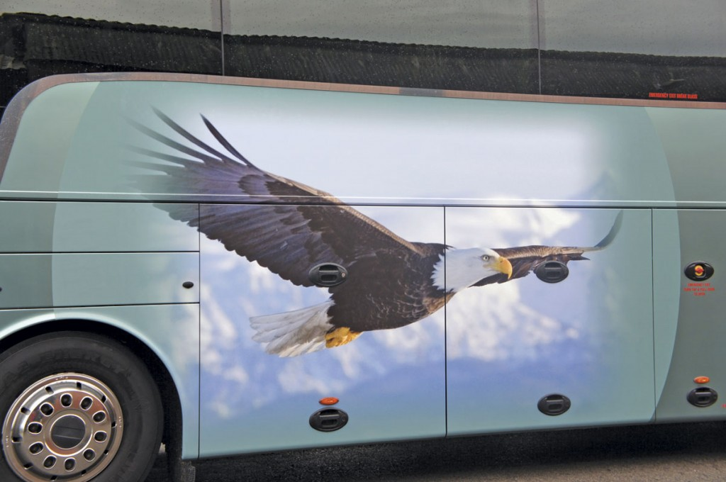 A close up of the eagle graphic.