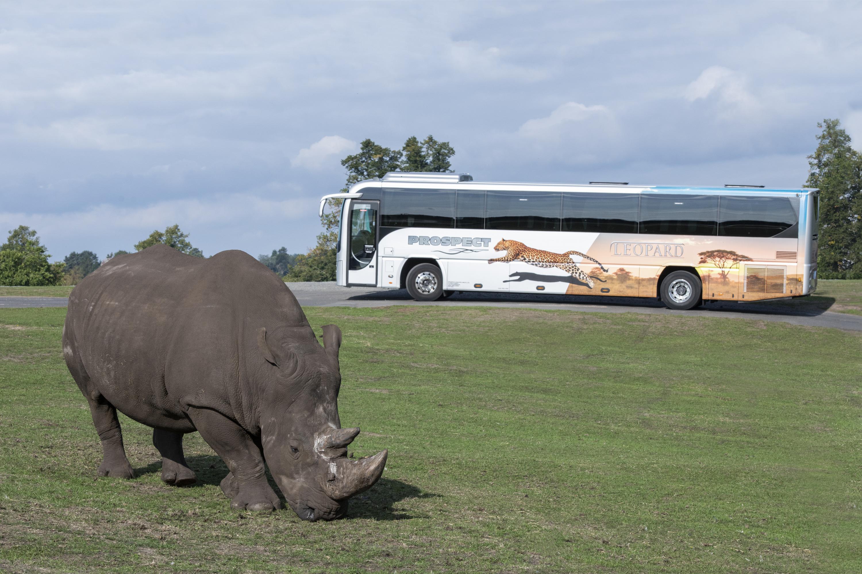 West Midlands Safari Park opens to groups